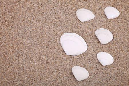 Whitebeige sea shells on sand, shells found on a Dutch beach Stock Photo