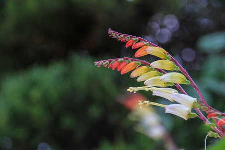 nature Imagens