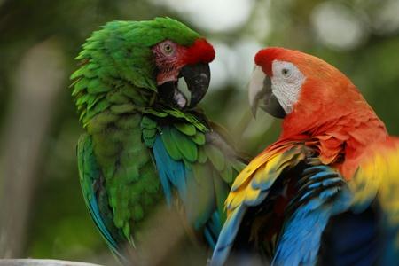 cockatoo Фото со стока