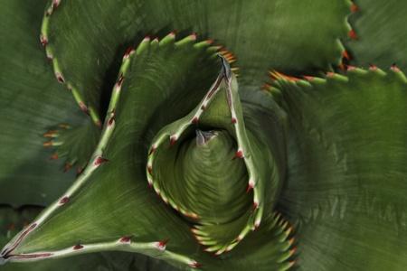close up Imagens