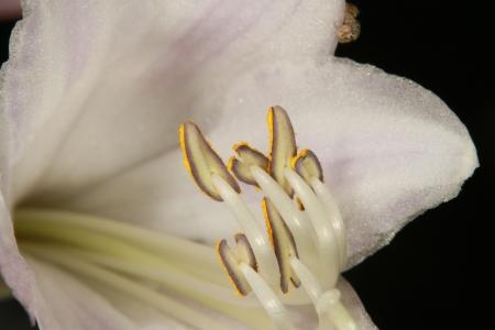 Closeup Imagens