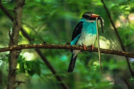 Kingfisher 版權商用圖片 - 21260177