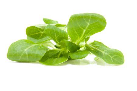 Fresh baby leaf isolated on white background photo