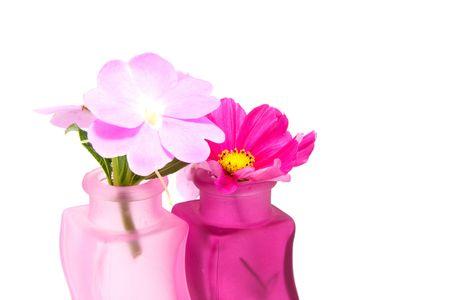 impatiens: Impatiens walleriana en florero Rosa aislado sobre fondo blanco  Foto de archivo