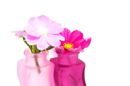 Impatiens walleriana in pink vase isolated on white background photo