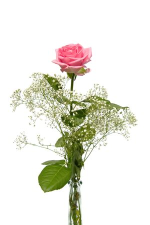 roses in vase: One single pink rose with gypsum herb in vase Stock Photo