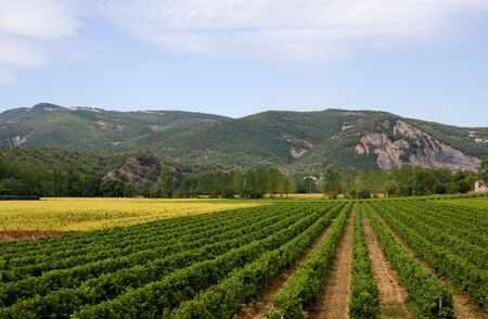 Landscape with vineyard, sunflowers and mountains in the Ardeche of France photo