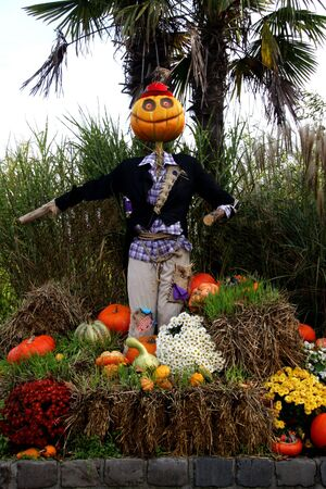 bugaboo: Happy Halloween with flowers and pumpkins by scarecrow