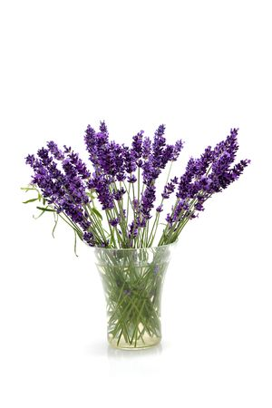 plucked lavender in glass vase isolated on white background photo