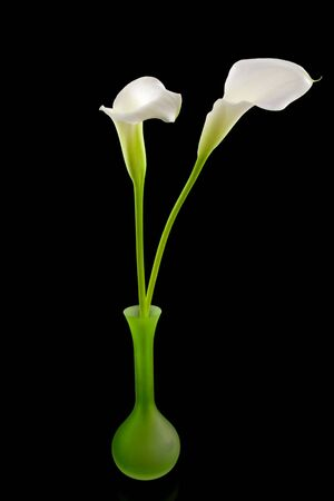 beautiful white Calla lilly in green vase over black background Stock Photo - 5696792