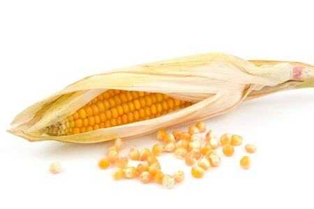 mais: an ear of mais corn with the husks still on isolated on white background