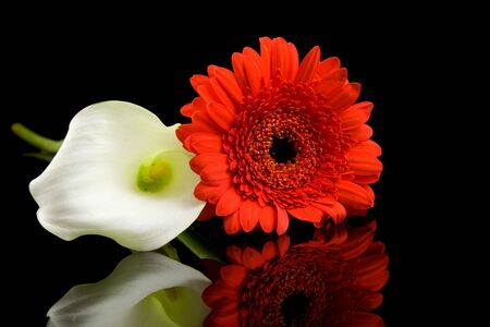 White Calla and red Gerber flowers with mirroring over black background photo