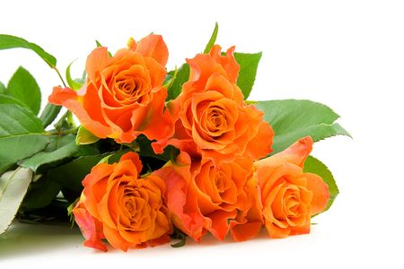 Stacked beautiful orange roses over white background