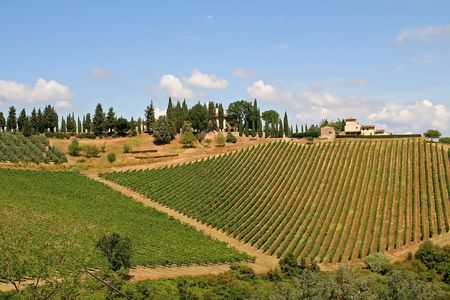 Landscape with vineyard in the Tuscany, Italy, on sunny day photo