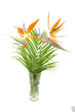 Strelitzia also known as bird of paradise flower in vase over white background Stock Photo