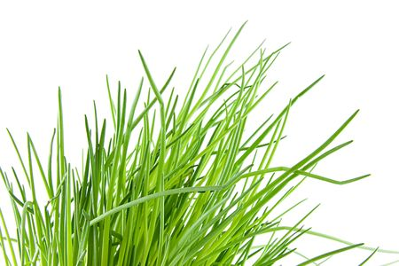 Fresh chives in closeup over white background Stock Photo