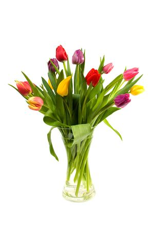 Dutch tulips in glass vase over white background