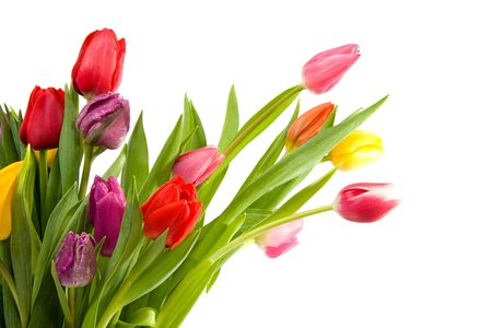 dutch: bouquet of Dutch tulips over white background
