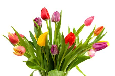 bouquet of Dutch tulips over white background Stock Photo - 6304506