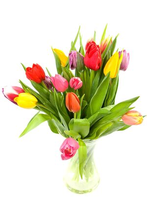 Colorful Dutch tulips in glass vase over white background