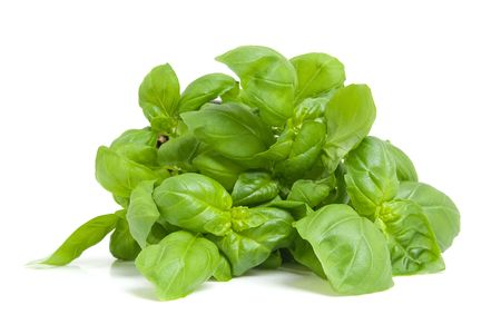 basil leaves: fresh basil plant in closeup isolated on white background