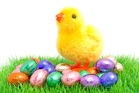 colorful chocolate easter eggs with yellow little chicken on grass over white background photo