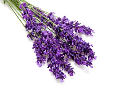 Plucked fresh lavender in closeup over white background Stock Photo