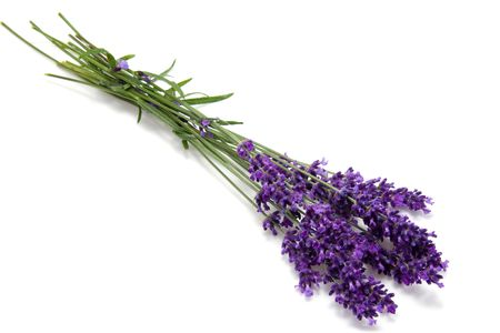 plucked: Little bouquet of plucked lavender over white background