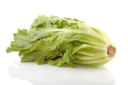 endive: crop of fresh endive isolated on white background