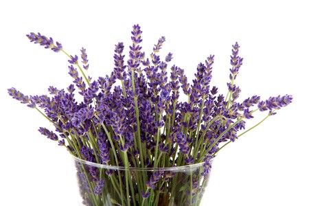 plucked lavender in glass vase over white background Stock Photo - 7336708