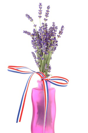 plucked: plucked lavender in pink vase with ribbon over white background
