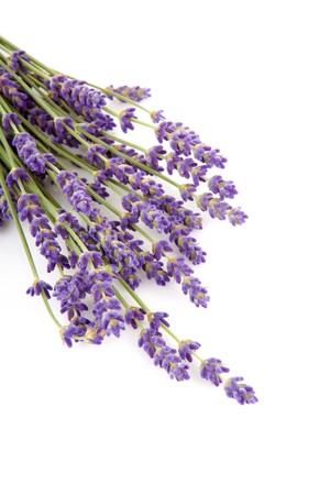 twigs of lavender isolated on white background