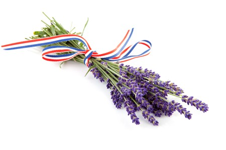 twigs of plucked lavender with ribbon isolated on white background photo
