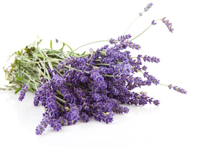 bouquet of plucked lavender isolated on white background