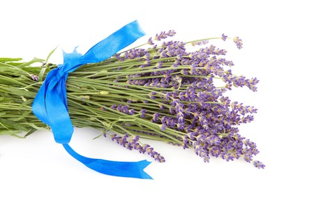 plucked: bouquet of plucked lavender with blue bow isolated on white background
