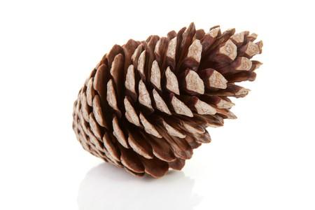 pomme de pin: Un pin grand c�ne isol� sur fond blanc Banque d'images