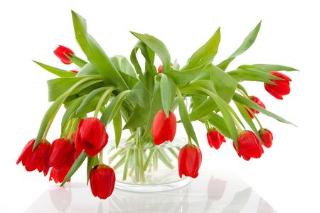 Bouquet of red tulips in vase over white background Stock Photo