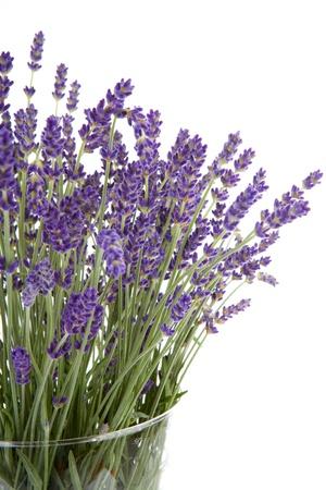 Plucked lavender in glass vase over white background Stock Photo