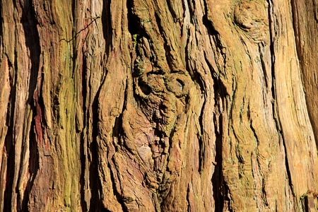 background of old tree trunk in closeup Stock Photo