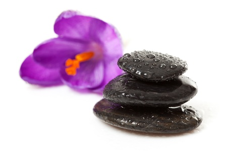 pile of three black pebbles with water drops and purple crocus flower over white background photo