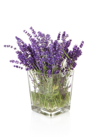 Bouquet of picked lavender in vase over white background photo