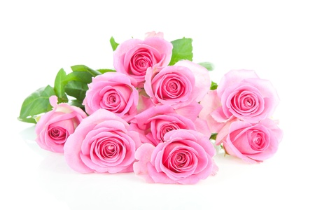 thorns and roses: Pile of pink roses over white background