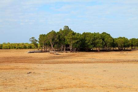 ebb: Afrykańskie drzewa mangrowe w przypływy z kajaków Zdjęcie Seryjne