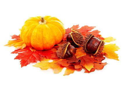 counterfeiting: decoration pumpkin, chestnuts and silk autumn leaves over white background