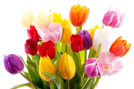 Bouquet of colorful tulips over white background