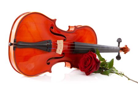 Violin and rose in closeup over white background photo