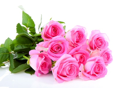 thorns and roses: Bouquet of pink roses over white background
