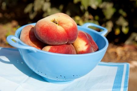 colander: fresh peaches in blue colander Stock Photo