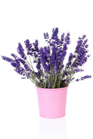 Bouquet of picked lavender in vase over white background Standard-Bild