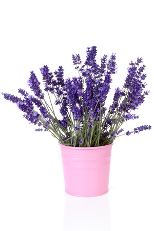 Bouquet of picked lavender in vase over white background 免版税图像